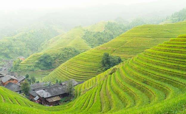 טרסת האורז בפיליפינים (צילום: אימג'בנק / Thinkstock)