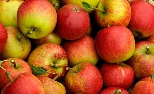 הרובוט שיחליף את קוטפי התפוחים (צילום: רויטרס)