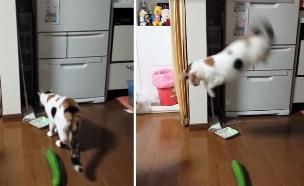 חתול ומלפפון (צילום: יוטיוב)