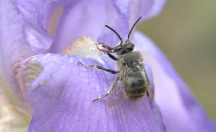 מזימת צוף הקפאין של הפרחים (צילום: videoblocks)