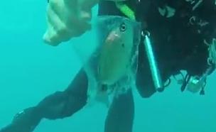 צפו: המבצע להצלת הדג מהשקית (צילום: דודו נחמיאס)