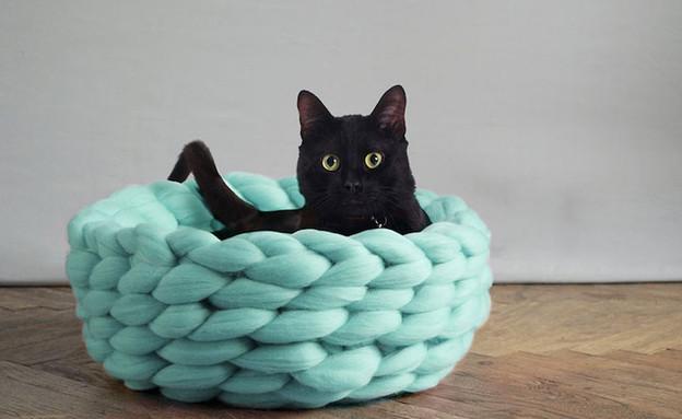 גם לחתול (צילום: ohhio)
