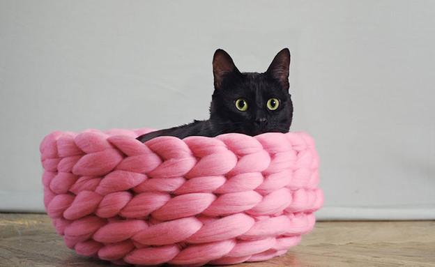 לחתול (צילום: ohhio)