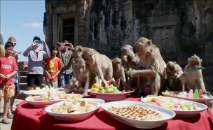 אכול כפי יכולתך: גרסת הקופים (צילום: רויטרס)