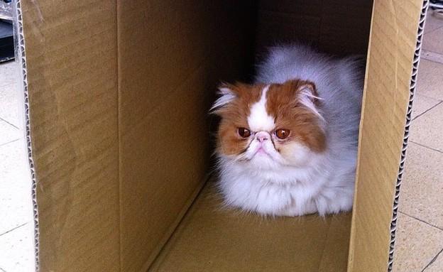 חתולה בקופסה (צילום: ניר סלונים)