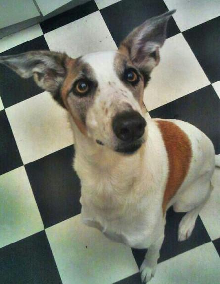 כלבה (צילום: אורית פורטי)