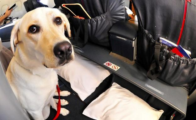 כלב במטוס (צילום: אימג'בנק / Thinkstock)