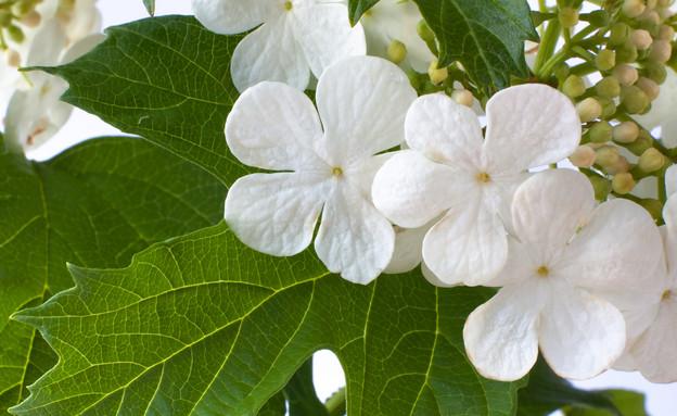 מורן, צמחי מרפא לכאבי מחזור (צילום: אימג'בנק / Thinkstock)
