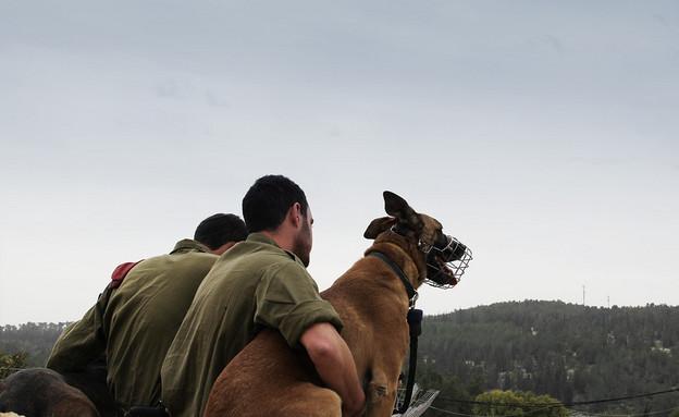 """הכלב סטאבי (צילום: דובר צה""""ל, באדיבות גרעיני החיילים)"""