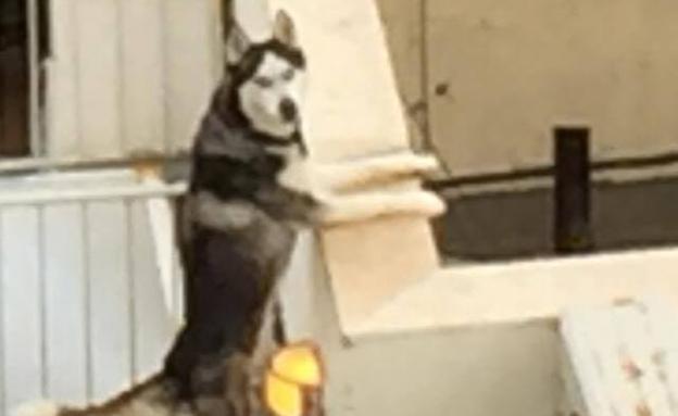 תיעוד: הכלב לבדו בגג הבניין