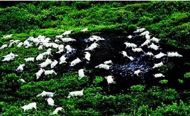 אגם ניוס (צילום: ויקיפדיה)
