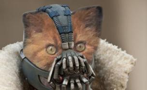 החתול הרצחני (צילום: reddit.com, מעריב לנוער)