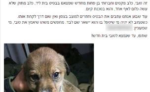"""לוחמי חטיבת הנח""""ל מצאו בית חם לגורה (צילום:  Photo by Flash90, פייסבוק)"""