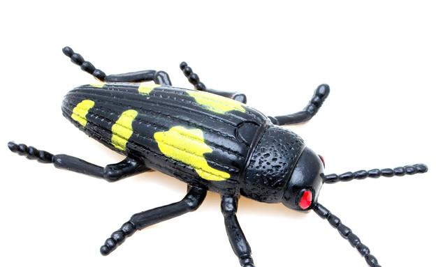 עד 30, חרקים מגומי (צילום: Shutterstock)