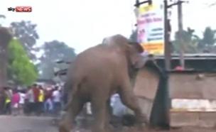פיל יצא למסע הרס בכפר בהודו. צפו (צילום: sky news)