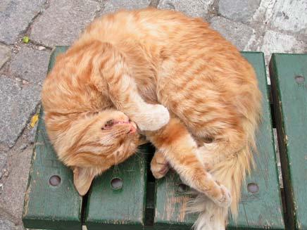 התעללות ושחיטת חתולים