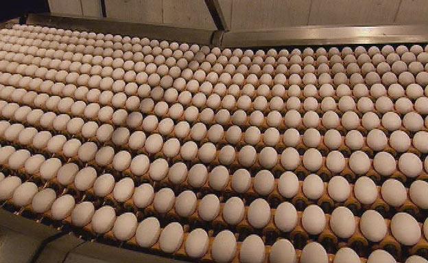 שוב: סכנת סלמונלה בביצים (צילום: חדשות 2)