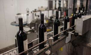 ייצור יין (צילום: יונתן סינדל / פלאש 90)