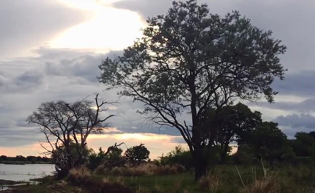 המסע המופלא לאפריקה (צילום: רון דבני, ספארי קומפני)