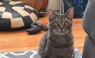 חתול מוזר (צילום: boredpanda, מעריב לנוער)