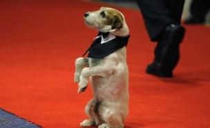 הכלב אוגי (צילום: מעריב לנוער)