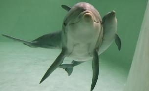 מחפשים דולפינים צעירים עם שיניים מושלמות
