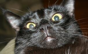 חתול שחור (צילום: מעריב לנוער)