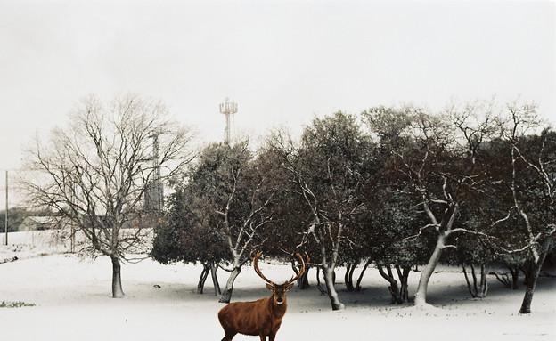 צילום של עמית ברלוביץ' (צילום: באדיבות גלריית ארטמיסיה)