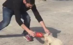 """החילוץ בבית שאן (וידאו WMV: מתוך """"בית שאן אוהבת חיות"""")"""