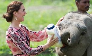 הנסיכה קייט מאכילה גור פילים שננטש