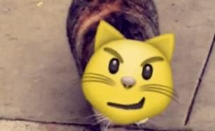 אימוג'י סטיקרס סנאפצ'אט (צילום: snapchat, מעריב לנוער)