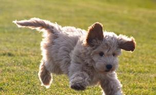 כלב פלאפי (צילום: mashable, מעריב לנוער)