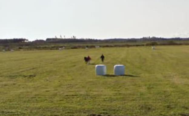 סוס בגוגל (צילום: גוגל)