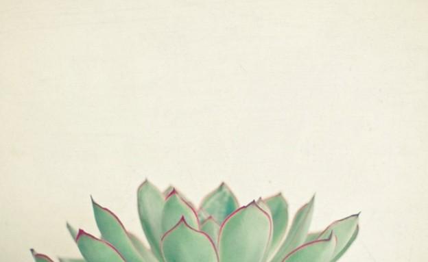 טבעי 01, הדפס סוקולנט, מחיר-החל מ-79 שקל (צילום: society6.com)