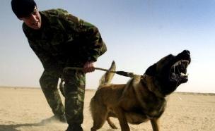 הכלב הציל את הלוחמים (צילום: Gettyimages IL)