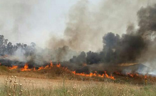 שריפה  בשפלה, היום (צילום: דוברות כבאות והצלה מחוז ירושלים)