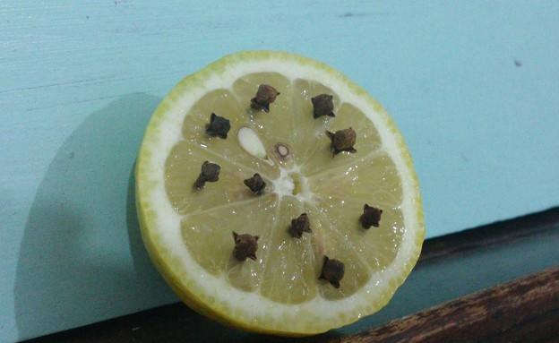 לימון וציפורן (צילום: אפרת ג'רופי)