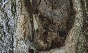 מה בגזע העץ (צילום: קייטרס)