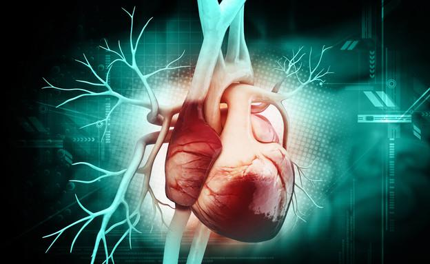 לב (צילום: Liya Graphics, Shutterstock)