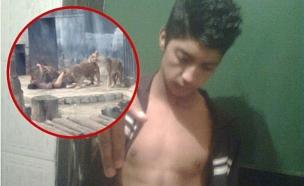 התאבדות בגוב אריות (צילום: twitter)