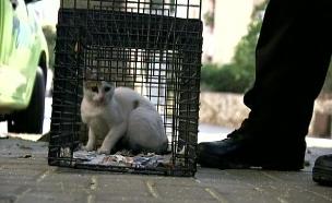 גם חתולים ברשימה. אילוסטרציה (צילום: חדשות 2)