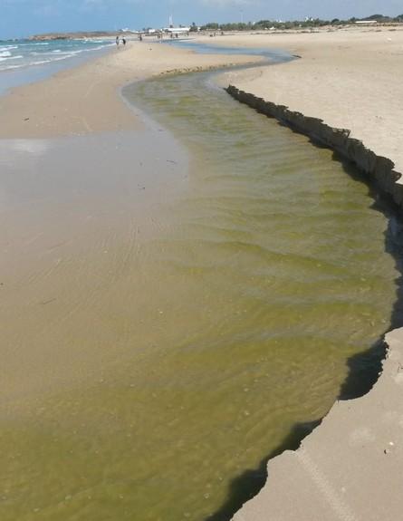 המוצא לים (צילום: RECO)