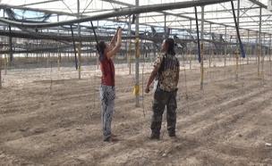 כך הפכו הסטודנטים לחקלאות - לפועלים (צילום: חדשות 2)
