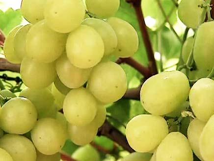 שווה בדיקה: מחירי הענבים (צילום: חדשות 2)