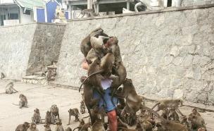 תקיפת קופים (צילום:  reddit)