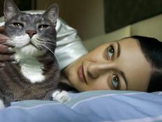 מיאו, חתולה (צילום: jupiter images)