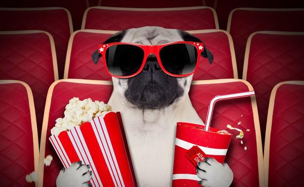 כלב בקולנוע (צילום: Shutterstock, מעריב לנוער)