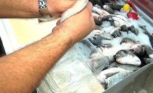 בקרוב: הוזלה במחיר הדגים הקפואים (צילום: חדשות 2)