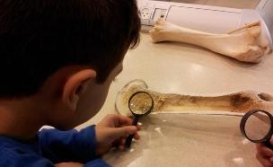 ילדים בוחנים את מבנה העצם בטענודע