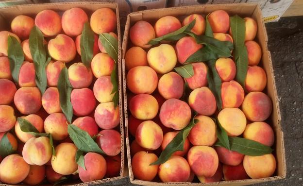 ארגז אפרסקים בשוק בבטומי (צילום:  שמעון איפרגן)